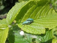 Seen in my garden (Frans Schmit) Tags: mygarden mijntuin fransschmit greenbeautyforlife