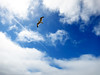 Flight is Freedom (TheJudge310) Tags: california sky usa bird clouds flying seagull flight agra