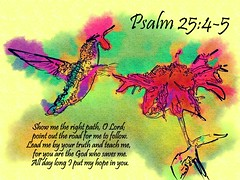 Psalm 25:4-5 nlt (Bob Smerecki) Tags: life love church true rock stone easter born high truth heaven king christ god spirit brother father ghost religion jesus lord christian mount holy moses again olives lamb bible alive commandments messiah risen salvation abba sanctuary prayers tabernacle nations sabbath blessed redeemer almighty sins scriptures passover psalm faithful everlasting slain forgive baptised crucified preist apostle forgiven 2545 deciples reserection strongtower
