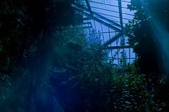 Greenhouse (Canon Canonet QL17, DM Paradies 200) (baumbaTz) Tags: park plants canon germany garden deutschland iso200 atl hamburg pflanzen july greenhouse 200 epson kit juli g3 dm garten canonet ql17 giii planten plantenunblomen blomen 2200 gewächshaus paradies botanischergarten botanischer c41 jobo canoncanonetql17giii v500 canoncanonetql17 autolab 2013 tetenal colortec epsonv500 dmparadies200 tetenalcolortecc41kit atl2200 joboautolabatl2200 20130720