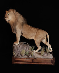 "Animal Art Taxidermy • <a style=""font-size:0.8em;"" href=""http://www.flickr.com/photos/27376150@N03/9417996166/"" target=""_blank"">View on Flickr</a>"