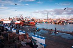 Essaouira (David Azurmendi) Tags: ocean travel sea fish david port puerto photography fisherman atlantic viajes fotografia essaouira viajar marroco azurmendi