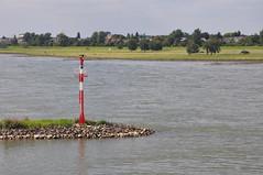 Vater Rhein (juergen.treiber) Tags: dsseldorf rhein 2011 wasserzeichen dsseldorf wasserstrase wasserstrae