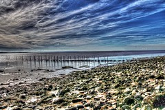 The Severn Estuary near Goldcliff (thomascambrensis) Tags: blue sky river fishing fishermen salmon estuary willow hazel severnestuary goldcliff putcherhouseranks putcherbaskets