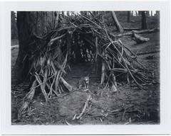 Guadelupe in Golden Gate Park (Polaroid SF) Tags: sanfrancisco goldengatepark blackandwhite chihuahua polaroid