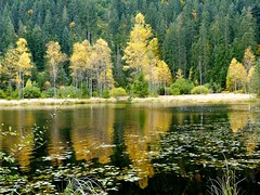 Black Forest: Ellbachsee (romanboed) Tags: travel autumn trees lake black reflection fall leaves forest germany landscape europe hiking foliage schwarzwald baiersbronn mitteltal ellbach ellbachsee