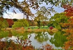 Central Park-Turtle Pond, 11.02.13 (gigi_nyc) Tags: nyc newyorkcity autumn sunset leaves centralpark autumnleaves autumncolors fallfoliage turtlepond leafpeeping thisisnewyorkcity