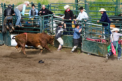 Rimbey Rodeo 2013 (Colby Stopa) Tags: canada sports cowboys nikon cowboy alberta rodeo rimbey d7000 nikond7000 colbystopa rimbeyrodeo
