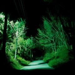 (akira ASKR) Tags: fuji okinawa 沖縄 provia100f hasselblad500cm nago rdpiii 名護市 planarcf80mm