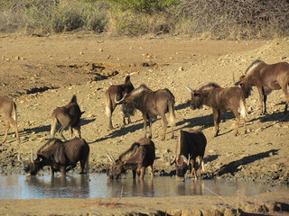 Namibia Safari - Lake Lodge 34