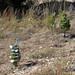 Trees_of_Loop_360_2013_283