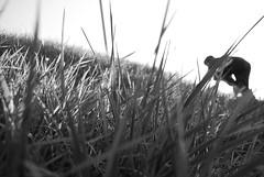 Run. (Isaac Shaw) Tags: blackandwhite grass run move