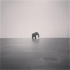 (thombe77) Tags: bw white elephant black sw elefant weiss schwarz 4s iphone instagram