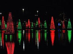 SeaWorld Orlando's Sea of Trees 1/2