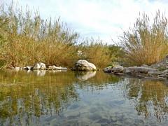 P2150241 (Jose Luque 91) Tags: rio de y animales patos seal callosa xirles ensarri
