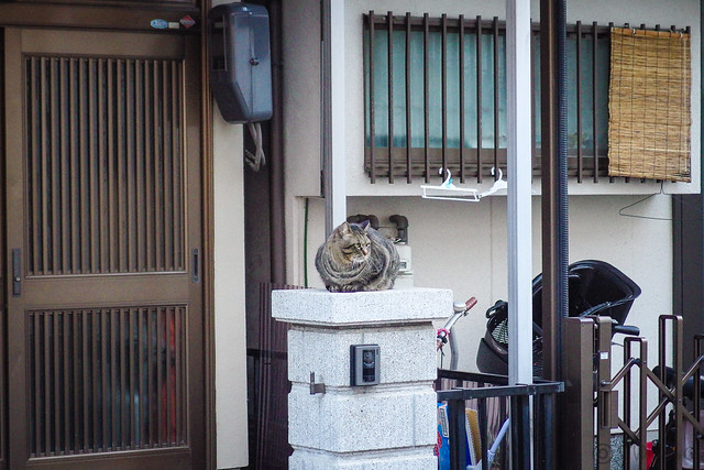 Today's Cat@2014-02-21