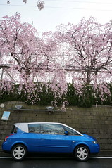 DSC09536 (macco) Tags: auto car japan cherry automobile blossom renault   sakura    matra avantime