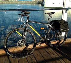 muirwoods in the morning light (phlatphrog) Tags: bicycle marin muirwoods 29er ergon frontrack chargesaddle spoonsaddle smartsams
