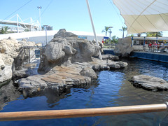Sea lions (Going to the Zoo with Trebaruna) Tags: valencia zoo aquarium spain oceanografic loceanografic loceanograficvalencia aquariumvalencia