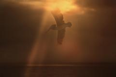 bird (irina_escoffery) Tags: