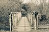 wooden bridge (desireeziemann) Tags: bridge netherlands canon landscape nederland 7d 70200 bizonbaai woodenbrigde canon70200lusm canon7d