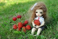DSC_4817 (Loljushka) Tags: doll bjd dongdong dollzone