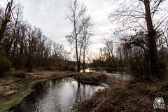 Lanca di Bernate (andrea.prave) Tags: bernate ticino parcodelticino valledelticino river fiume lanca lombardy lombardia nature natura naturaleza