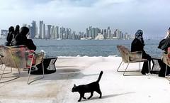 Doha skyline (Polježičanin) Tags: doha qatar skylineofdoha waterfront cafe flickrbronzetrophygroup