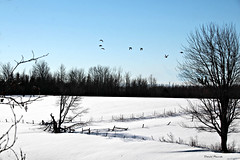 Une autre journée en hiver / Another day in winter (deplour) Tags: champs niege ferme clôture oiseaux arbres field snow farm fence birds trees inexplore explorer explored