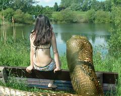 Alicia_Snake1 (tallteeth711) Tags: vore feet fetish legs damsel vorevids shoop snake fishvore toes nylons stockings