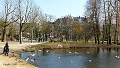 """Vogels voeren in het Vondelpark - Amsterdam. Feeding the birds in """"Vondelpark"""" - Amsterdam. (Cajaflez) Tags: vogelsvoeren feedingthebirds birds vogels oiseau gull meeuw duif dove vondelpark amsterdam thenetherlands ducks eenden"""