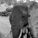 Samburu Kenya-129.jpg