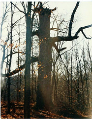 tree on top of the hill (timp37) Tags: house tree film us dad top hill indiana 80s pike centerville abington