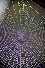 Dew-Covered Webs (jamieanne) Tags: morning mist misty fog web spiderweb foggy dew 52613