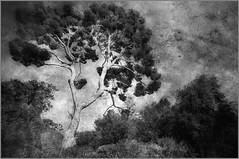 Nice (MrMustard13) Tags: tree arbre awesometrees