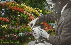 Conservatory (dadadreams (Michelle Lanter)) Tags: collage conservatory collageart firstaid postcardart alteredpostcard medicalart