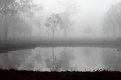 smoke on the water (kento2014) Tags: fog sunrise reflections flickr australia estrellas queensland southeast ipswich flickerestrellas coppercloudsilversun inspiringcreativeminds