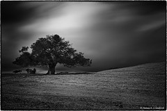 "Rest Yourself Under the Mighty Oak (James A. Crawford - ♪♫♪""Crawf""♪♫♪) Tags: california longexposure trees wallpaper sky blackandwhite bw usa white art nature photoshop canon landscape eos blackwhite creative oaks canoneos oaktrees blackdiamond digitalphotography edges sanluisobispocounty autofocus vpu orcutt ndfilter creativephotography neutraldensityfilter neutraldensity cs5 efex niksoftware creativedigitalphotography flickraward tonalcontrast theunforgettablepictures creativepostprocessing dfine20 canoneos5dmarkiii qualitysurroundings mygearandme mygearandmepremium mygearandmebronze ringexcellence dblringexcellence silverefexpro2 imageborders magicmomentsinyourlifelevel1 vpu2 vpu3 vpu4 vpu5 vpu6 vpu7 vpu8 vpu9 vpu10"