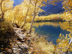 Good Day for a Walk Along the Shore (Steve Corey) Tags: fallleaves mountains bluewater sierranevada groves relfections highsierra aspentrees convictlake lundycanyon