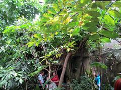 summer canada vancouver aquarium amazon rainforest britishcolumbia stanleypark 2013
