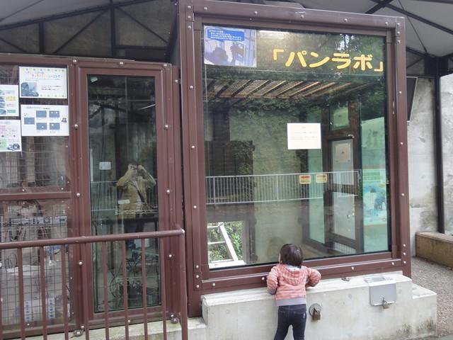 チンパンジーの知能の高さが分かる「パンラボ」|名古屋市東山動植物園