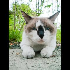 (Masahiro Makino) Tags: japan digital cat photoshop kyoto olympus adobe   e1 zuiko lightroom 1454mm f2835 20060914152118e1ls640p