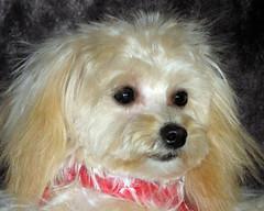 Cloe III.jpg (mamanat - Alison Squiers Photography) Tags: dog elements cloe