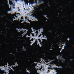 Snowflake (point and shoot camera) ((Jessica)) Tags: snowflake chicago littlebigshot