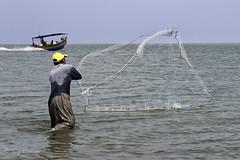 On the beach_(series 3frames)_DSC7819 copie (Serge THELLIER) Tags: beach fisherman nikon onthebeach fishermen mangrove malaysia penang root pcheur d3 racine malaisie souche 2014 mangroveswamp penangbeach nikond3 sergethellier vision:outdoor=099 vision:sky=0782 vision:ocean=0669 rootofmangroveswamp