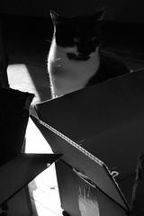 image (Eva O'Brien) Tags: cat nikon kitty whiskers sunbeam d3100 nikond3100 evacares evaobrien