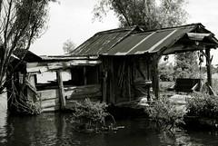 HendersonSwampNEF (282) (wmkaramjr) Tags: la moss louisiana gators bayou cajun cypresstrees acadiana henederson