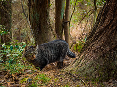 PhoTones Works #4800 (TAKUMA KIMURA) Tags: wild nature animal japan cat landscape scenery stray 日本 猫 自然 風景 動物 ねこ kimura em1 景色 ノラネコ takuma 琢磨 野良猫 木村 photones