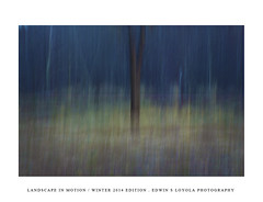 LANDSCAPEINMOTION2015-001 (Edwin Loyola) Tags: winter abstract nature landscape seasons icm intentionalcameramovement landscapeinmotion edwinsloyola edwinloyola edwinsloyolaphotography