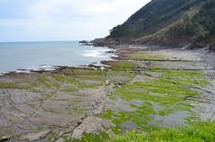 79 x 54 Playa (eduiturri) Tags: playa bizkaia ispaster playadeogella